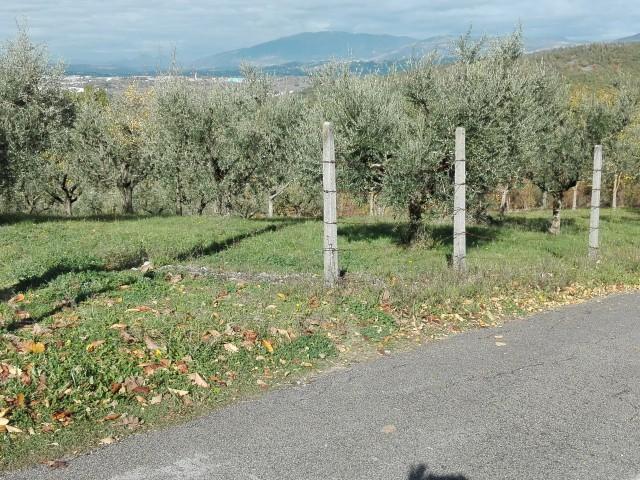 Terreno Agricolo in Vendita a Sgurgola