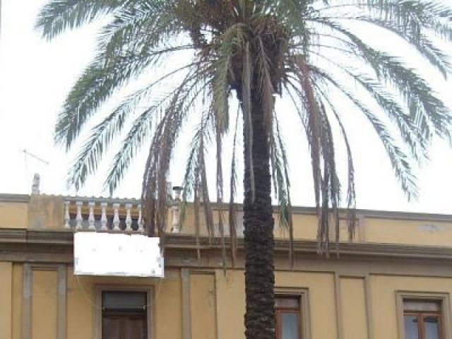 Locale Commerciale in Vendita ad Oristano Piazza Roma Centro Oristano