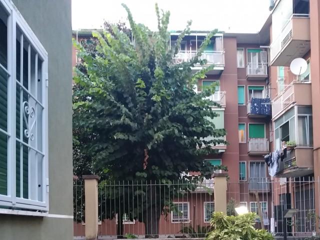 Appartamento in Affitto a Milano via Privata Tanaro 18 mm Cimiano