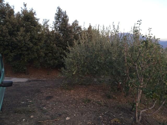 terreno residenziale in vendita a bronte c da corvo