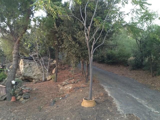 terreno residenziale in vendita a bronte c da corvo foto2-46236672