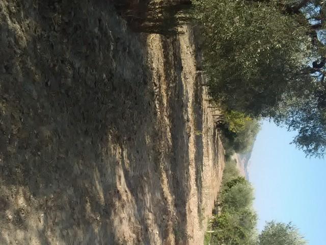 terreno agricolo in vendita a montescaglioso via fratelli menzano 01 foto3-80292016