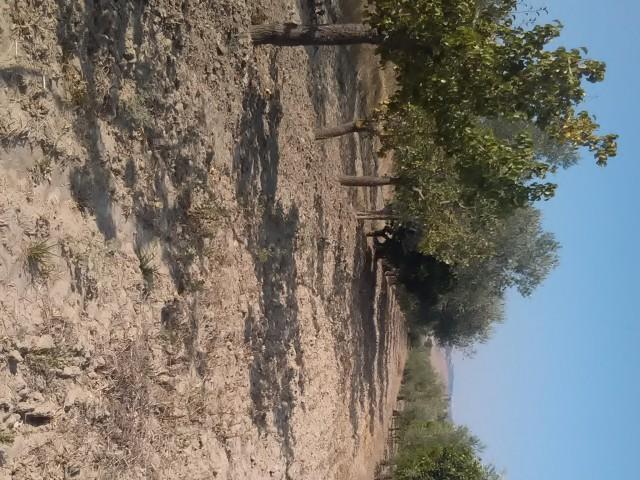 terreno agricolo in vendita a montescaglioso via fratelli menzano 01 foto4-80292016