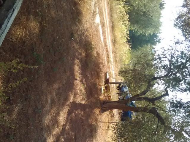terreno agricolo in vendita a montescaglioso via fratelli menzano 01 foto2-80292016