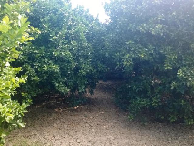 terreno agricolo in vendita a cassano jonio contrada lattughelle foto2-94497672