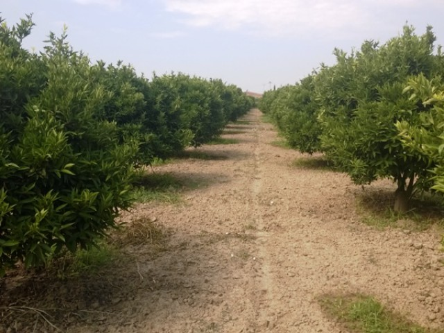 terreno agricolo in vendita a cassano jonio contrada lattughelle foto3-94497672